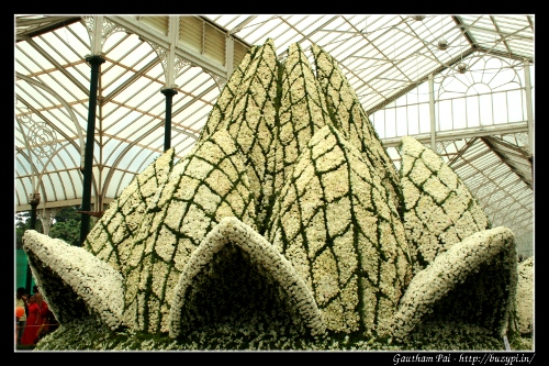 Lotus Temple at Lalbagh Flower Show - August 2011